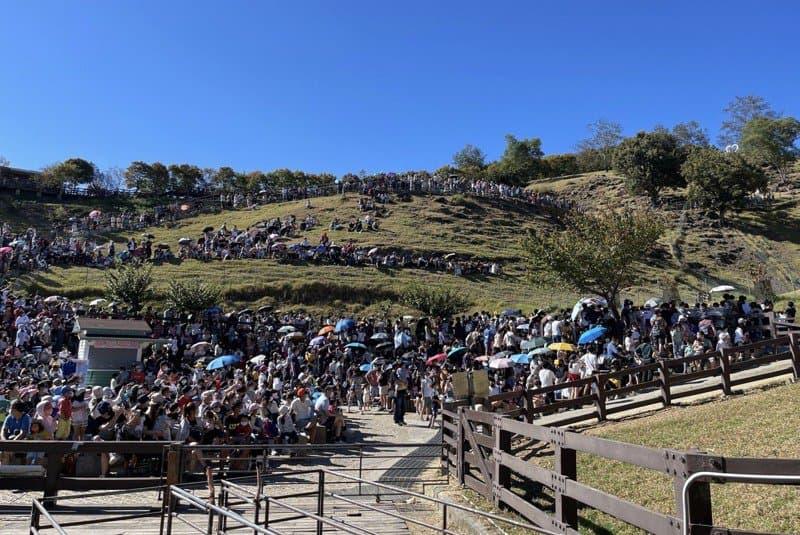 國慶日到處人滿為患!清境農場湧入8千人 步道全部擠滿人